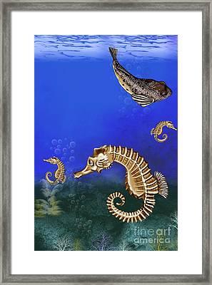 Sea Horse Framed Print by Karen Sheltrown