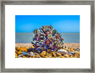 Framed Print featuring the photograph Sea Kale. by Gary Gillette