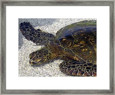 Sea Life Framed Print
