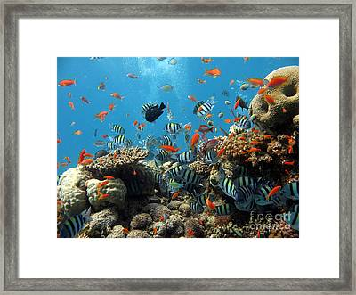 Sea Life Framed Print by Boon Mee