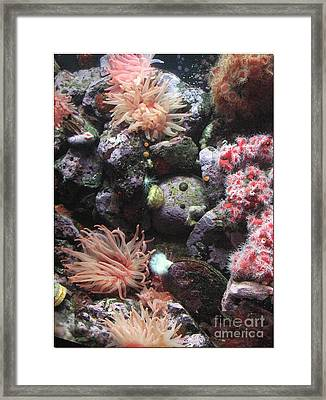Framed Print featuring the photograph Sea Life by Chris Anderson