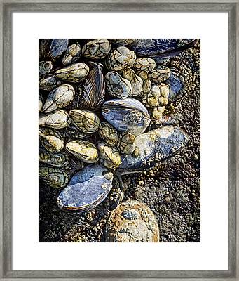 Sea Life Framed Print by Kelley King