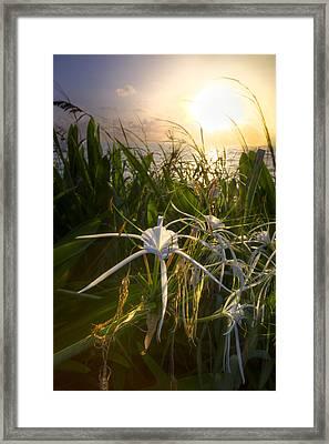 Sea Lily Framed Print by Debra and Dave Vanderlaan