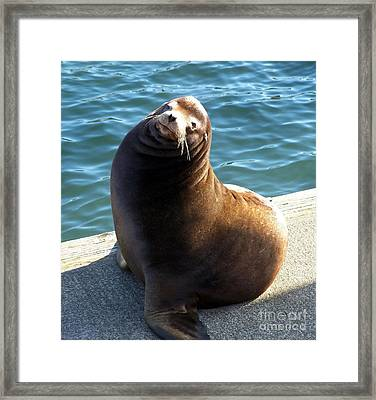 Framed Print featuring the photograph Sea Lion Basking In The Sun by Chalet Roome-Rigdon