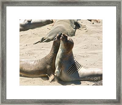 Sea Lion Love From The Book My Ocean Framed Print by Artist and Photographer Laura Wrede