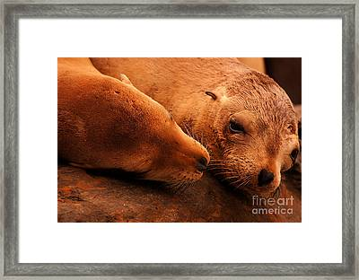 Framed Print featuring the photograph La Jolla Love by John F Tsumas