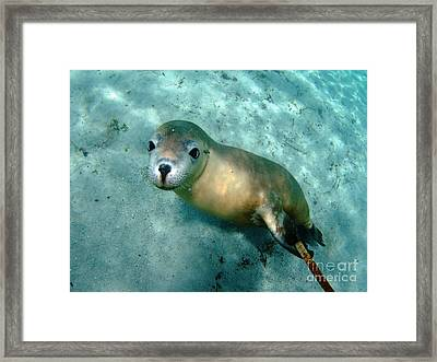 Sea Lion On The Seafloor Framed Print by Crystal Beckmann