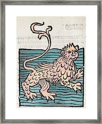 Sea Lion Framed Print by Paul D Stewart