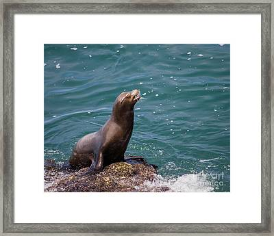 Sea Lion Posing Framed Print by Dale Nelson