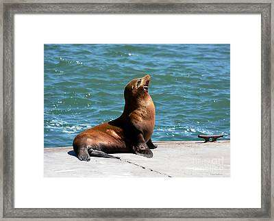 Sea Lion Posing On Boat Dock Framed Print