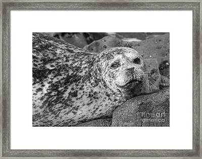 Sea Lion Stare In Monochrome Framed Print by Darleen Stry