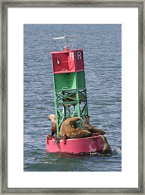 Sea Lions At Rest Framed Print by Gary Lobdell