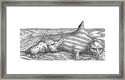 Sea Monster Attacks Ziphius, 16th Framed Print