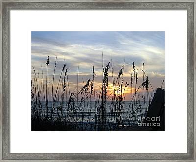 Framed Print featuring the photograph Sea Oak Sunset by Shelia Kempf