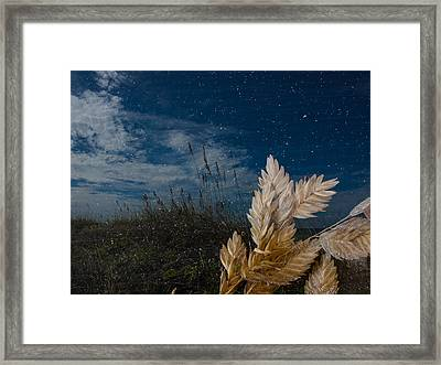 Sea Oat Beach Framed Print