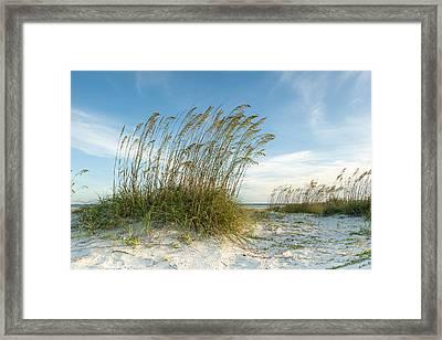 Sea Oat Dunes Framed Print by Barbara Northrup