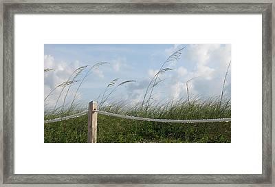 Sea Oat Garden Framed Print by Rosie Brown