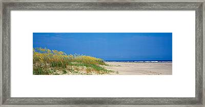 Sea Oat Grass On The Beach, Charleston Framed Print