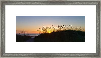 Sea Oat Grass On The Coast, Florida, Usa Framed Print