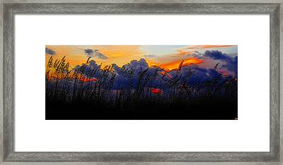 Sea Oat Sunset Framed Print by David Lee Thompson