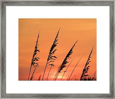 Sea Oat Sunset Framed Print by JC Findley