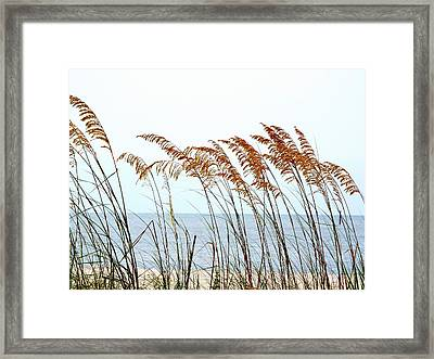 Sea Oats And Serenity Framed Print by Cindy Croal