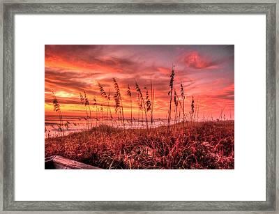 Sea Oats At Dawn  Framed Print