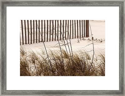 Sea Oats Framed Print by Barry Jones