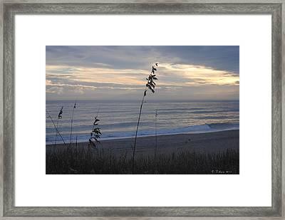 Sea Oats Framed Print
