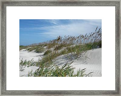 Framed Print featuring the photograph Sea Oats by Ellen Tully
