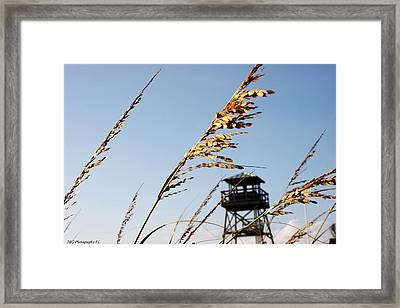 Sea Oats Framed Print by Marty Gayler