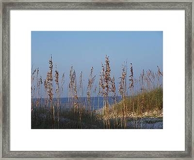 Framed Print featuring the photograph Sea Oats by Michele Kaiser