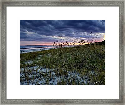 Sea Oats Framed Print by Phill Doherty