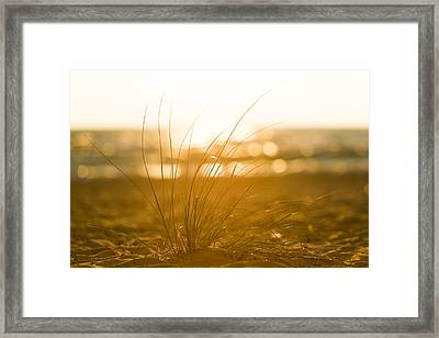 Sea Oats Sunset Framed Print by Sebastian Musial