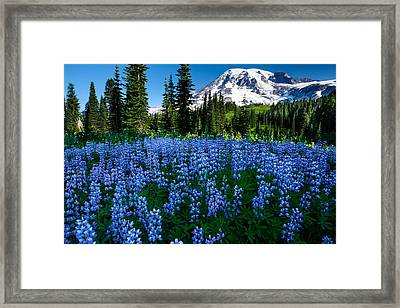 Sea Of Blue Framed Print by Dan Mihai