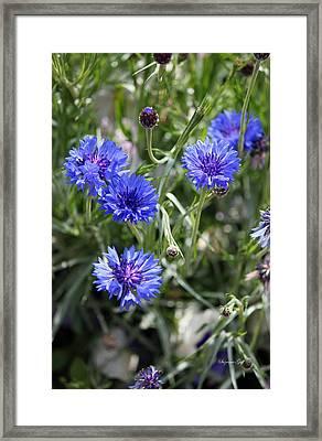 Sea Of Blue II Framed Print