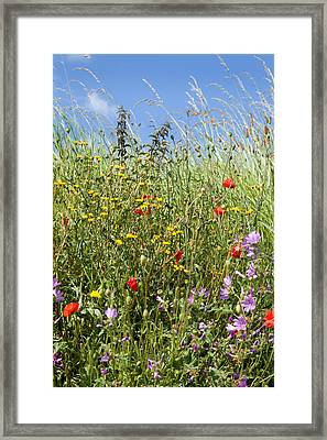 Sea Of Colour Framed Print by Paul Lilley