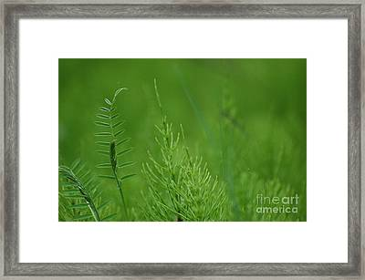 Framed Print featuring the photograph Sea Of Green by Bianca Nadeau