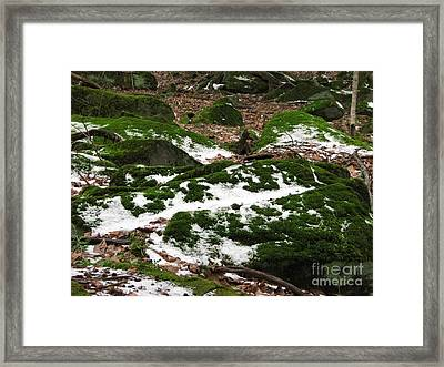 Sea Of Green Framed Print