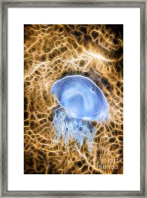 Sea Of Interconnectivity Framed Print by Jorgo Photography - Wall Art Gallery