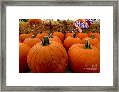 Sea Of Pumpkins Framed Print by Amy Cicconi