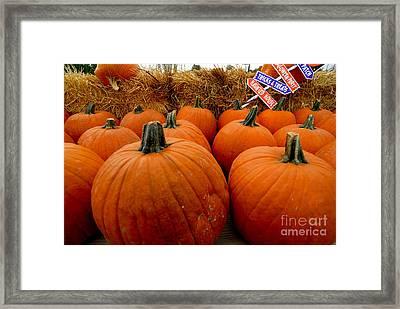 Sea Of Pumpkins Framed Print