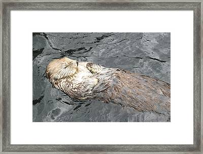 Sea Otter Framed Print by Brian Chase