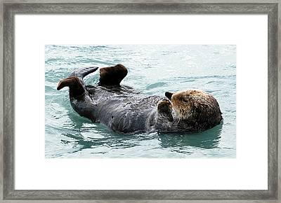 Sea Otter Framed Print by Mike Ross