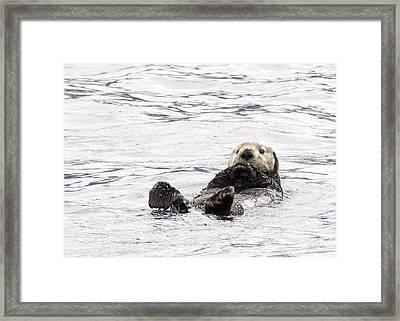 Sea Otter Framed Print by Saya Studios
