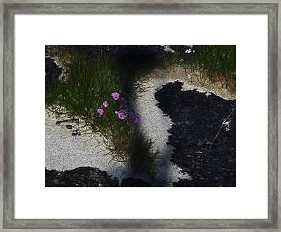 Sea Pink Framed Print by Steve Watson