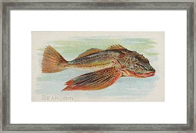 Sea Robin, From The Fish From American Framed Print by Issued by Allen & Ginter