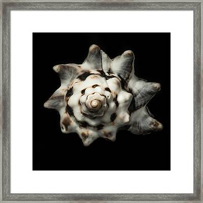 Sea Shell #1 Framed Print