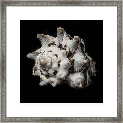 Sea Shell #2 Framed Print