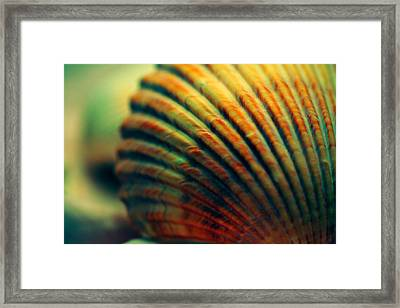 Sea Shell Art 1 Framed Print